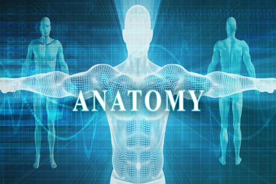 SISFFIT004 Incorporate Anatomy and Physiology Principles into Fitness Programming